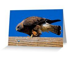 041209 Swainsons Hawk Greeting Card