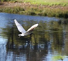 Water Bird by Flinky