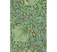 Wallpaper Sample with Forget-Me-Nots Photographic Print
