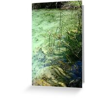 Broken Sedges - Pitt Spring Greeting Card