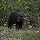 bear bonds by wnichol