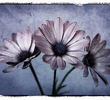 Three Amigos by Ann  Van Breemen
