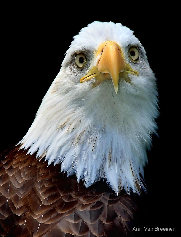 Eagle Eyed by Ann  Van Breemen