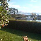 Apples on a row by Jorunn