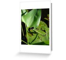 Handsome Meadow Katydid Greeting Card