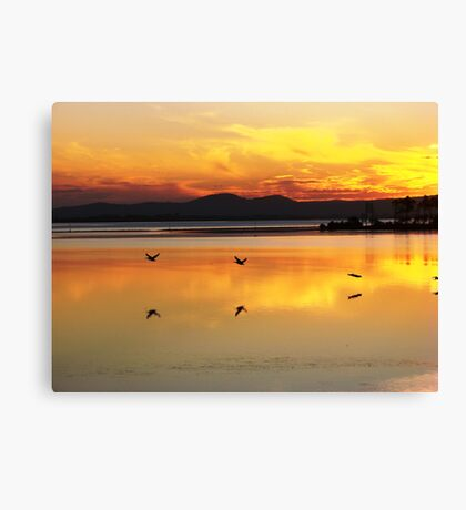 Orange Flying Pelican Sunset Canvas Print