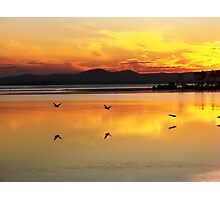 Orange Flying Pelican Sunset Photographic Print