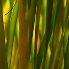 reed grass by wendy lamb