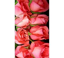 Roses and  Roses Photographic Print