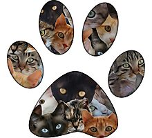 Cats Paw Photographic Print
