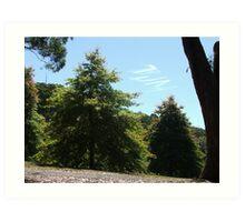Trees Tall Art Print