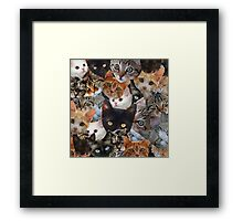 Kitty Collage Framed Print