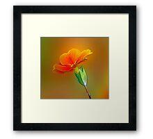 Little Yellow Flowers Framed Print