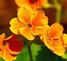 Yellow Flowers by Dipali S