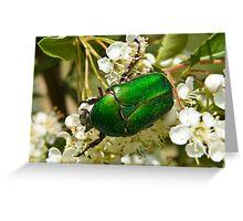 Green Beetle 1 Greeting Card