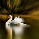 Swan in the lake (with a zoom effect) by TJ Baccari Photography