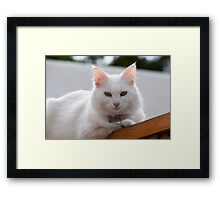Really not another picture! Framed Print
