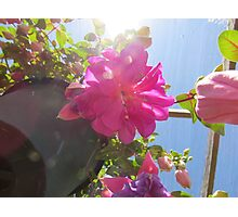 Fuschia flower Photographic Print