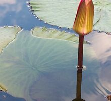lily pond 5 by schiabor