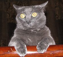 Lily Russian Blue by CaliWildViolet
