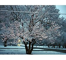 Early April Snow Photographic Print
