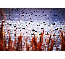 WATERFOWL REFUGE Photographic Print
