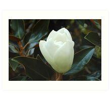Magnolia Bulb Art Print