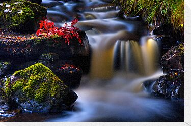 West Highland Burn in Autumn. Scotland. by photosecosse /barbara jones