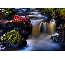 West Highland Burn in Autumn. Scotland. Photographic Print