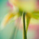 Flower VI by trbrg