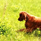 Dog in Field by terrebo