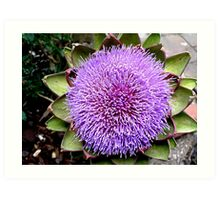 Artichoke bloom Art Print