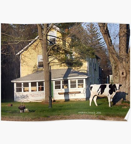A Cow in The Front Yard with a Bedit Poster