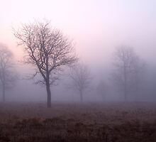 Pink Fog by shazie