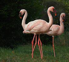 three flamingos by Nance