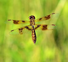 Fly Dragon Fly by ©Dawne M. Dunton