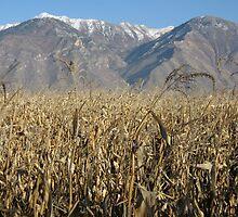 Provo Utah plains by Turbinephoto