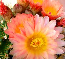 Soft And Prickly by Susan Bergstrom