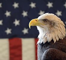 Bald Eagle in front of the American Flag by Jeff Hathaway