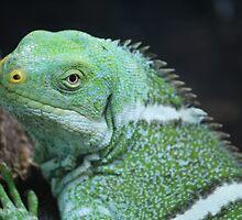 Fijian Crested Iguana by Leanne Allen