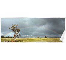 Dead Tree Rainbow Poster