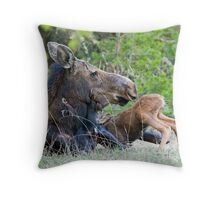 Moose Cow, Days Old Calf Nudging to Nurse Throw Pillow