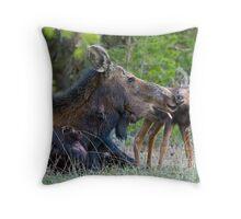 Injured Moose Cow, Licking Days Old Calf Throw Pillow