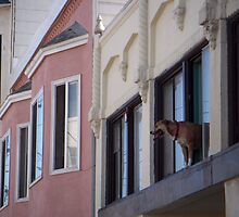 Dog in Window 1 by Tama Blough