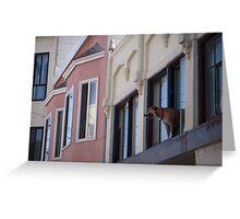 Dog in Window 1 Greeting Card