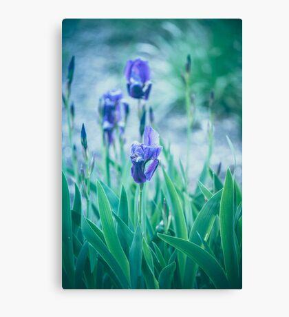 Dream Flowers 3 Canvas Print