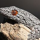 Reptiles of Australia: By Paul Duckett by Paul Duckett