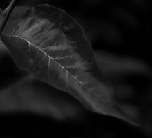 Dark Leaf by ChrisBaker