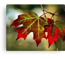 Feeling of Autumn - Maple leaves  Canvas Print