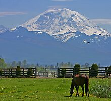 Mt. Rainier and grazing horse by Barb White